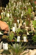 Botanicgarden 029