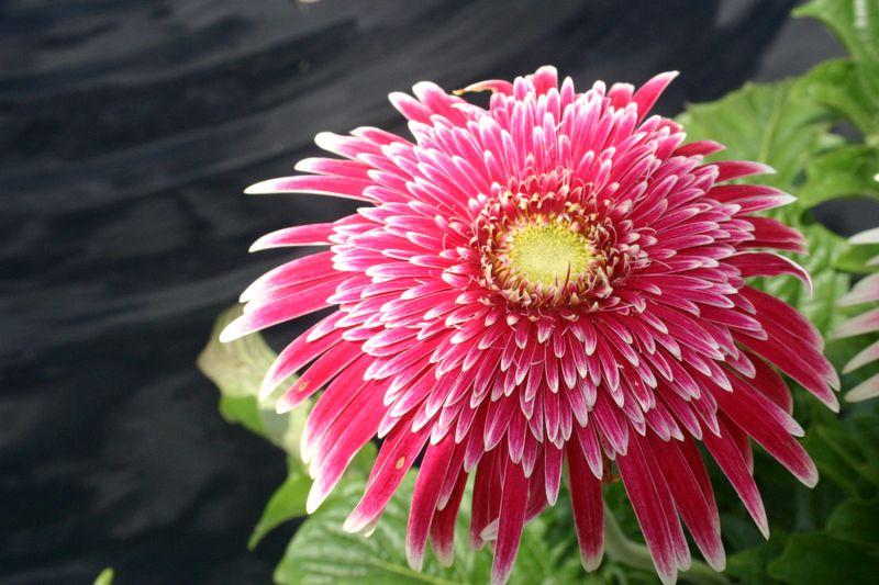 Botanicgarden 052